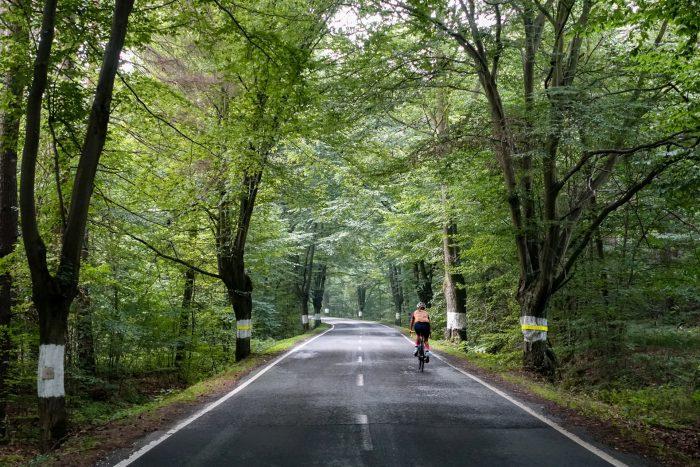 Oderske vrchy. Kolarz jadący drogą wśród drzew